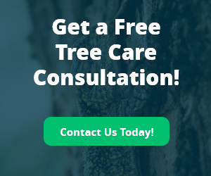 Free Tree Care Consultation