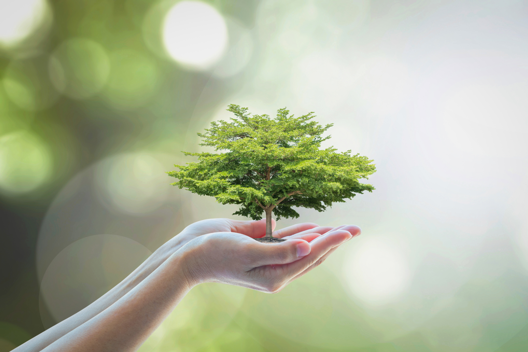 simply trees